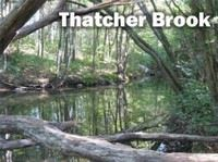 Thatcher Brook, surrounded by trees.